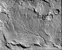 Drainage channels merging to form larger valleys on the martian surface.