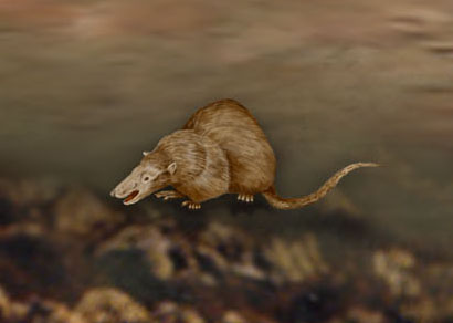 When Did The First Mammals Show Up On Earth   An Early Mammal Photo    First Mammals On Earth